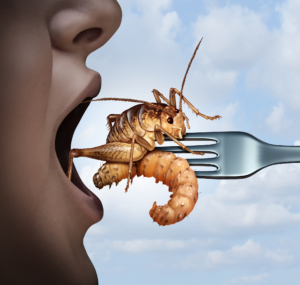 The Omnivore's Dilemma Eating Bugs