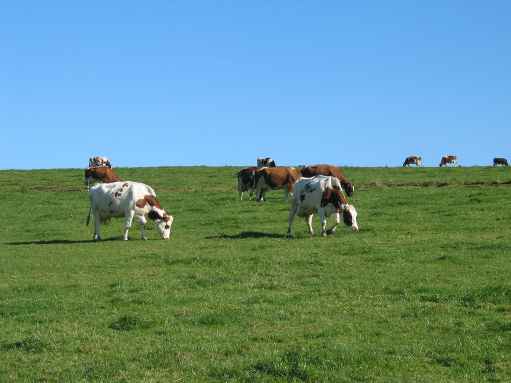 The Omnivore's Dilemma Grassfed Cattle