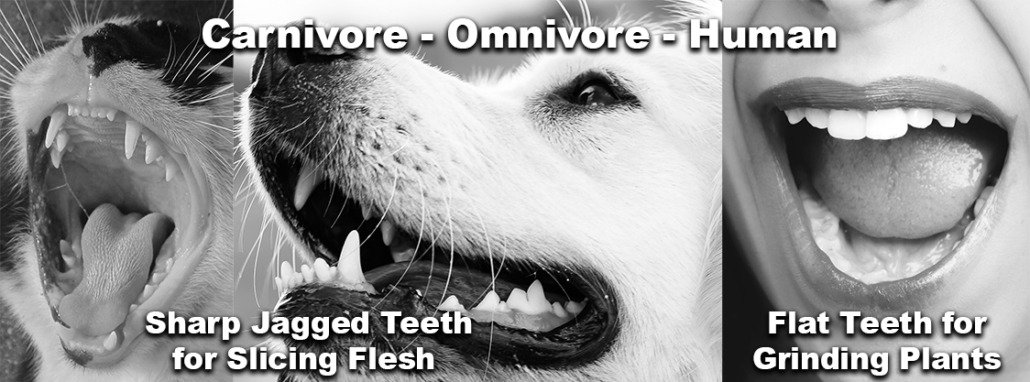 The Omnivore's Dilemma Teeth