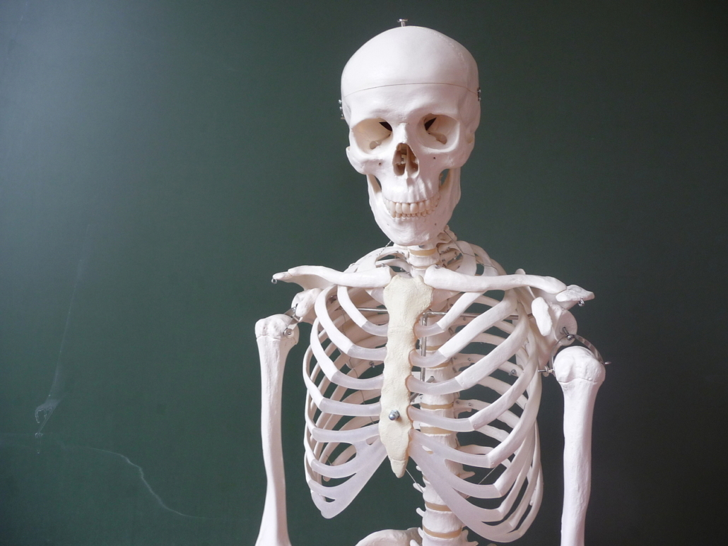 Do Humans Need Dairy Bones